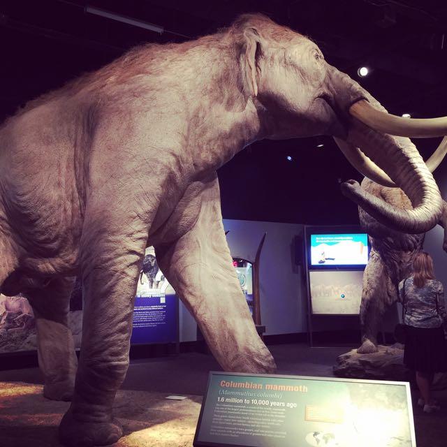 ロイヤルBC博物館「マンモス:氷河期の巨人たち」2016年5月31日撮影